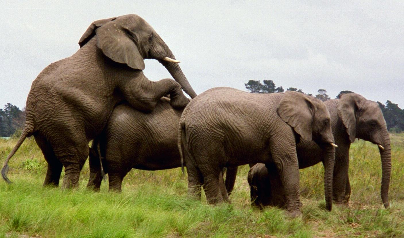 Смотреть хуй слон 23 фотография